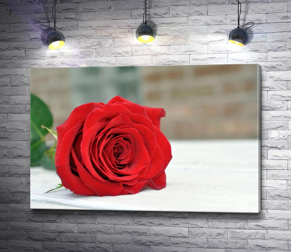 """Картина """"Красная роза на подоконнике"""""""