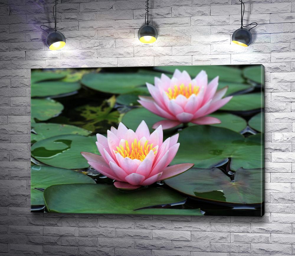 """Картина """"Два цветка лотоса в пруду"""""""