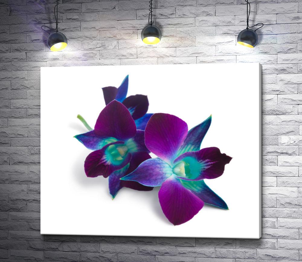 """Картина """"Фиолетовые орхидеи на белом фоне"""""""