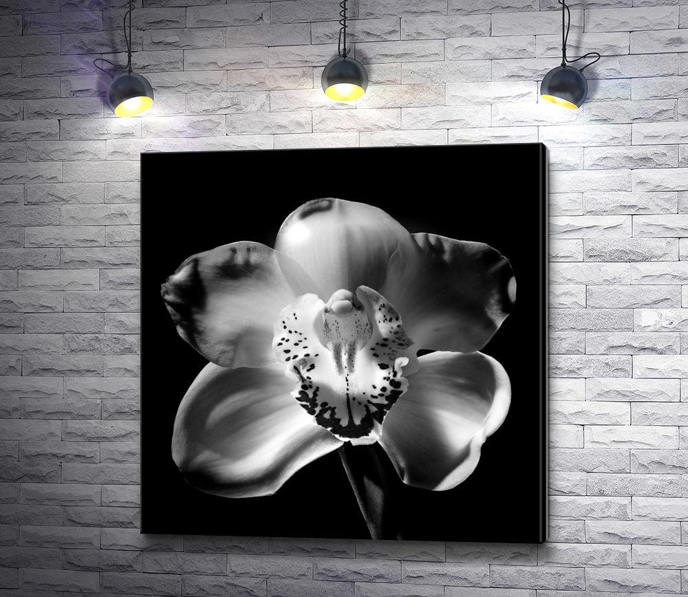 """Картина """"Орхидея - черно-белое фото"""""""