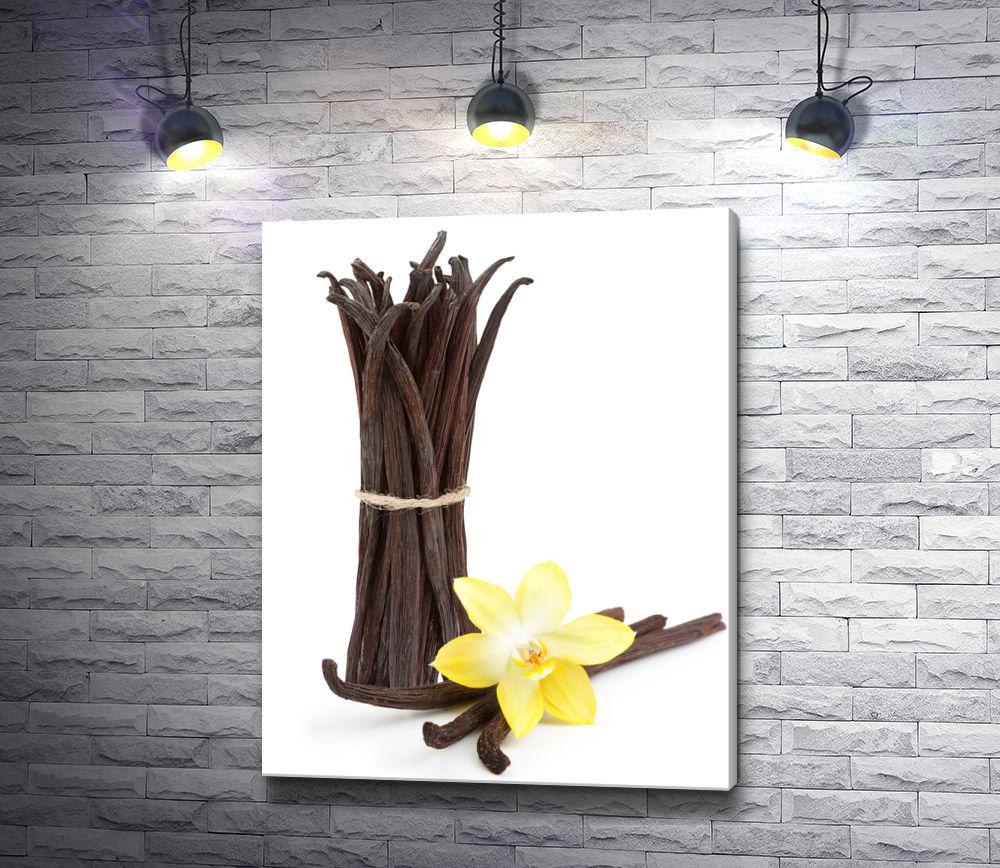"""Картина """"Стручки ванили и желтая орхидея на белом фоне"""""""