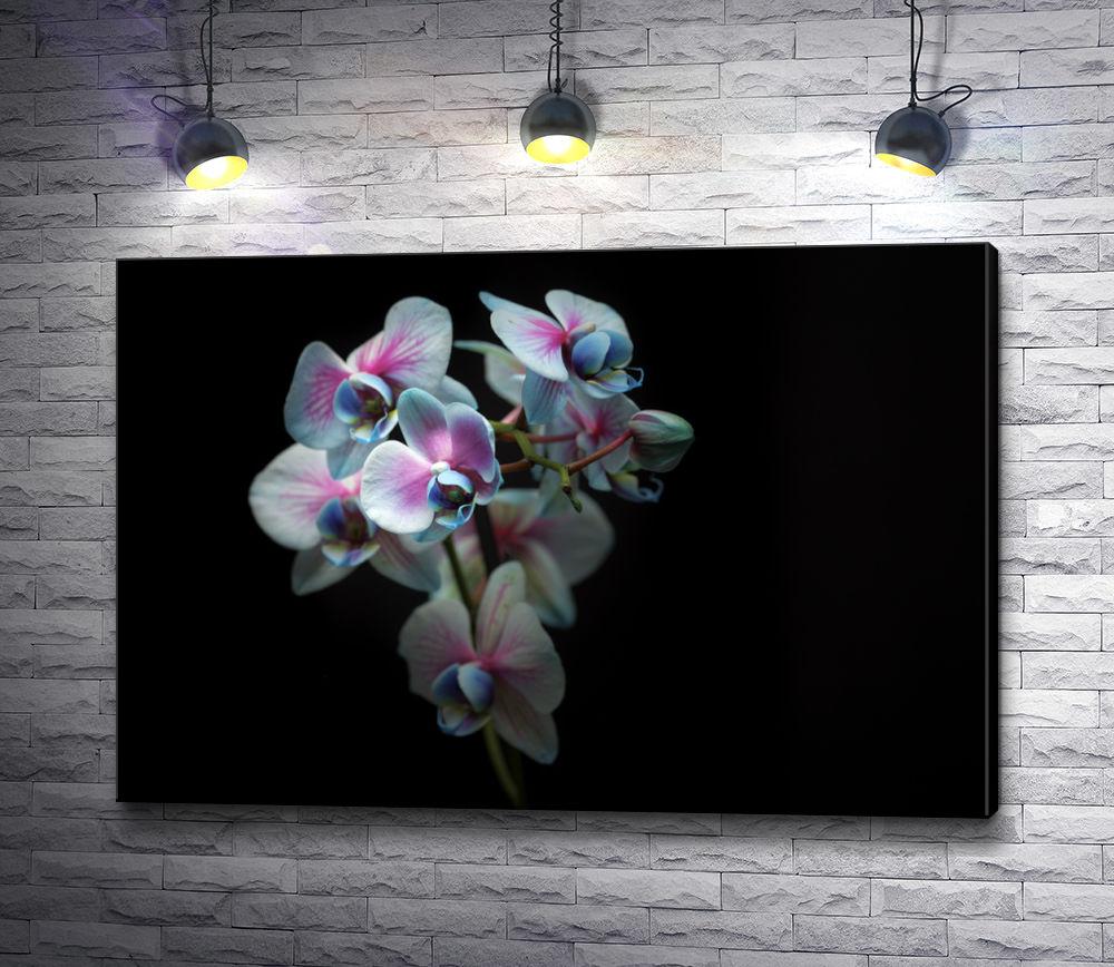 """Картина """"Экзотические орхидеи на черном фоне"""""""