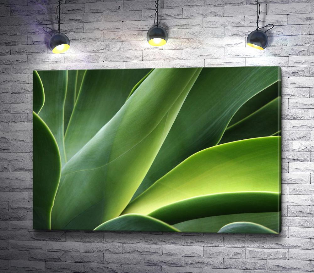 """Картина """"Зеленые листья. Макросъемка"""""""