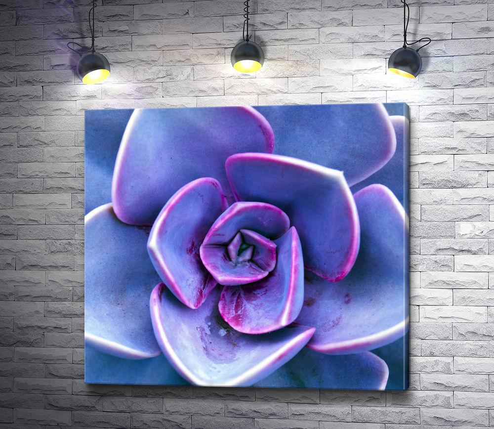 "Картина ""Пурпурный каменный цветок - суккулент"""