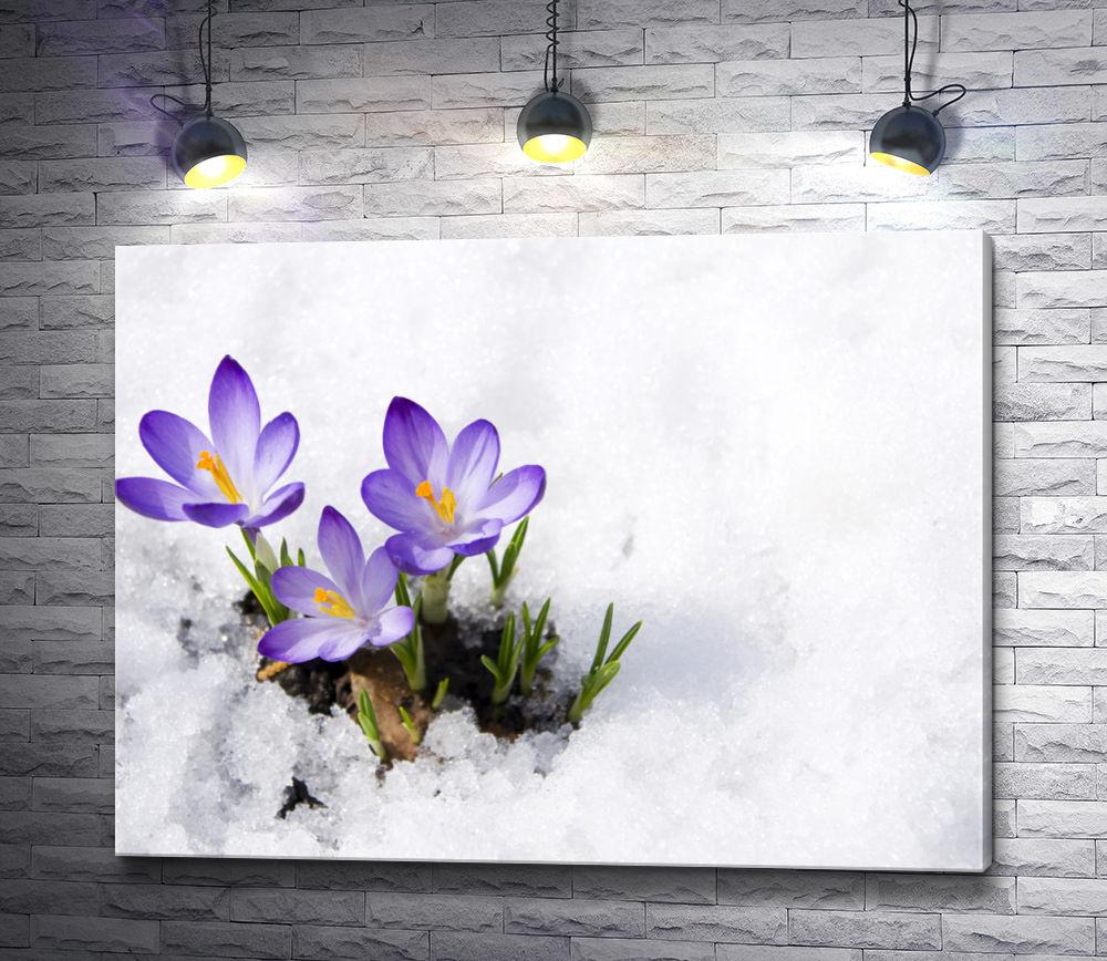 """Картина """"Крокусы весной на снегу"""""""