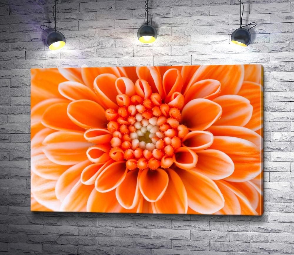 """Картина """"Сердце оранжевой хризантемы. Макросъемка"""""""