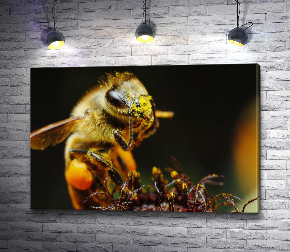 """Картина """"Огромная пчела. Макро"""""""