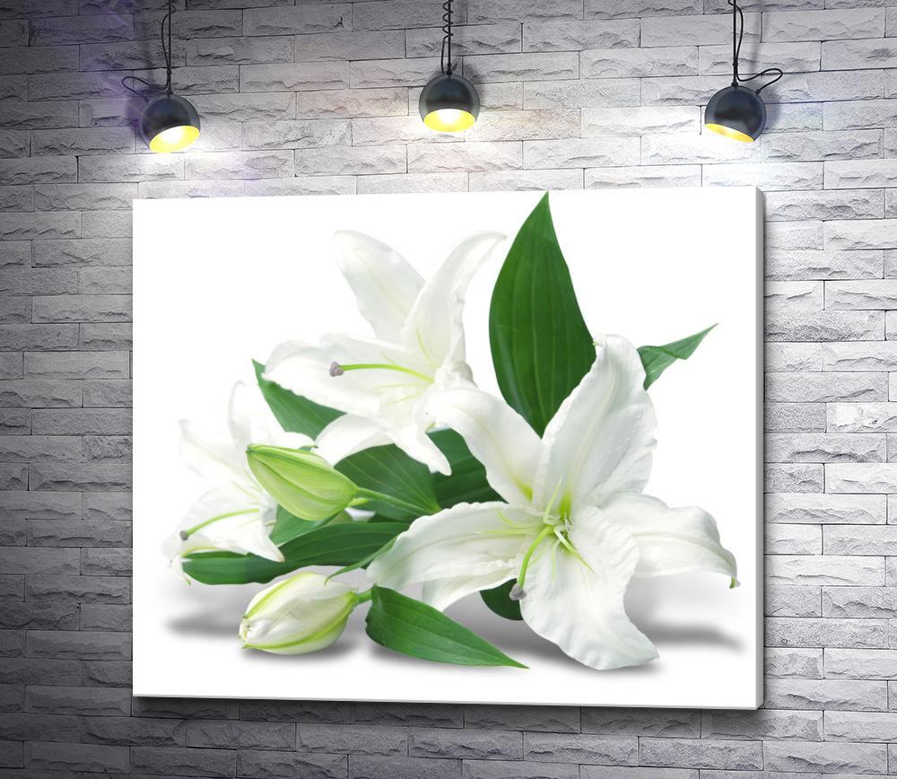 """Картина """"Белые лилии на белом фоне"""""""