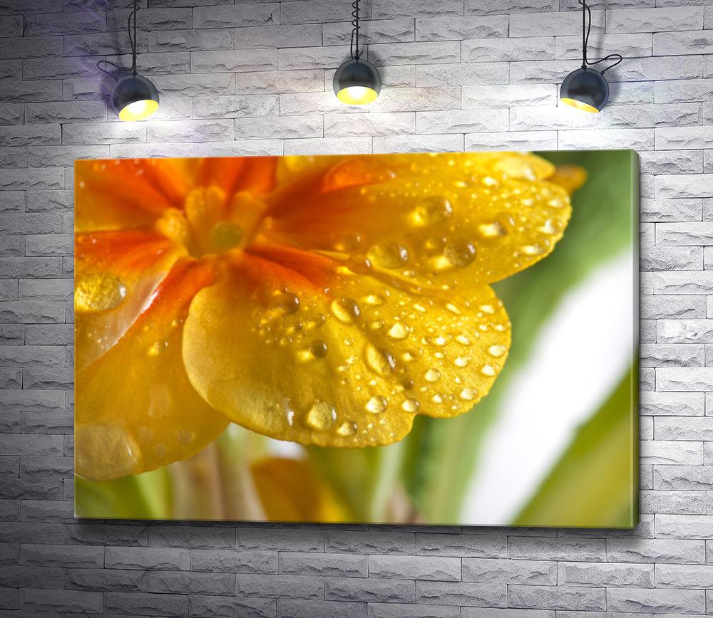 """Картина """"Желтый первоцвет с каплями воды"""""""
