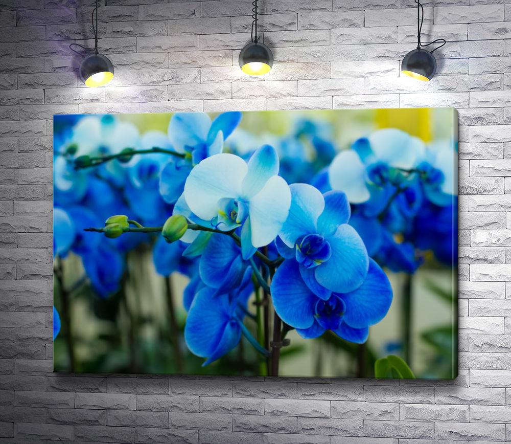"""Картина """"Веточки голубых орхидей"""""""
