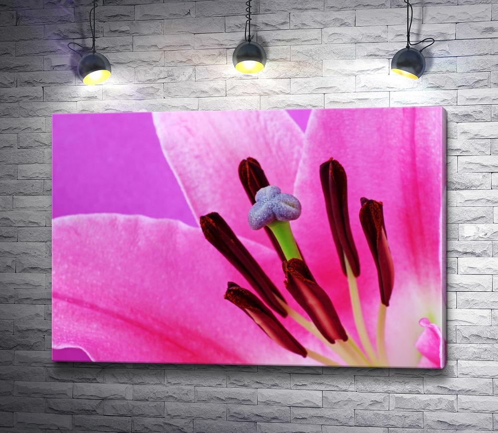 """Картина """"Розовая лилия. Макросъемка"""""""