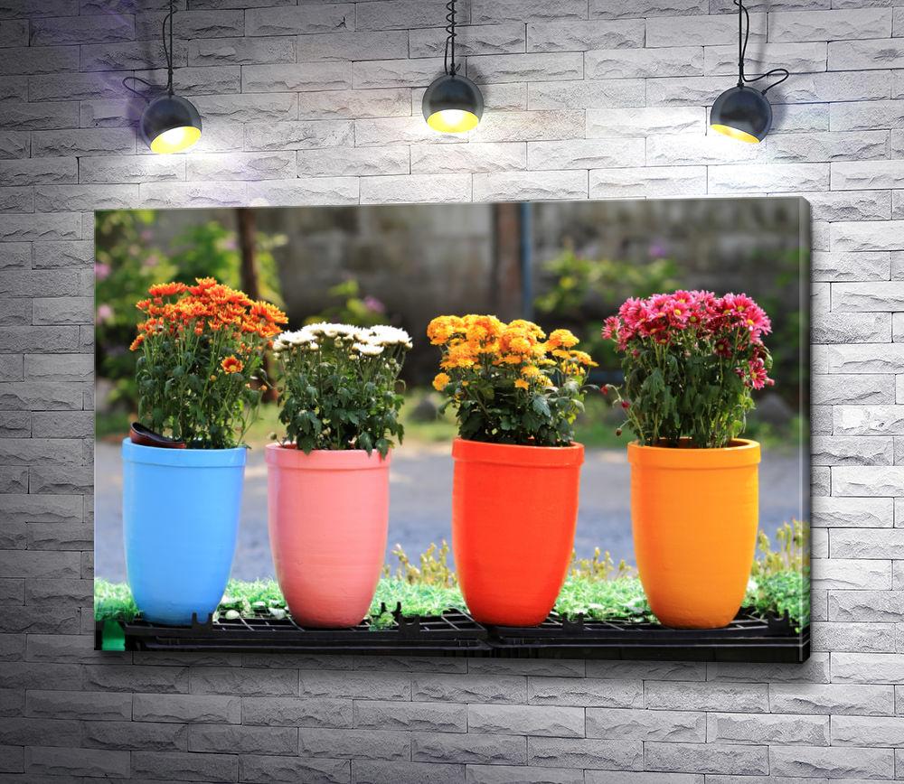 """Картина """"Разноцветные садовые горшки с букетами хризантем"""""""