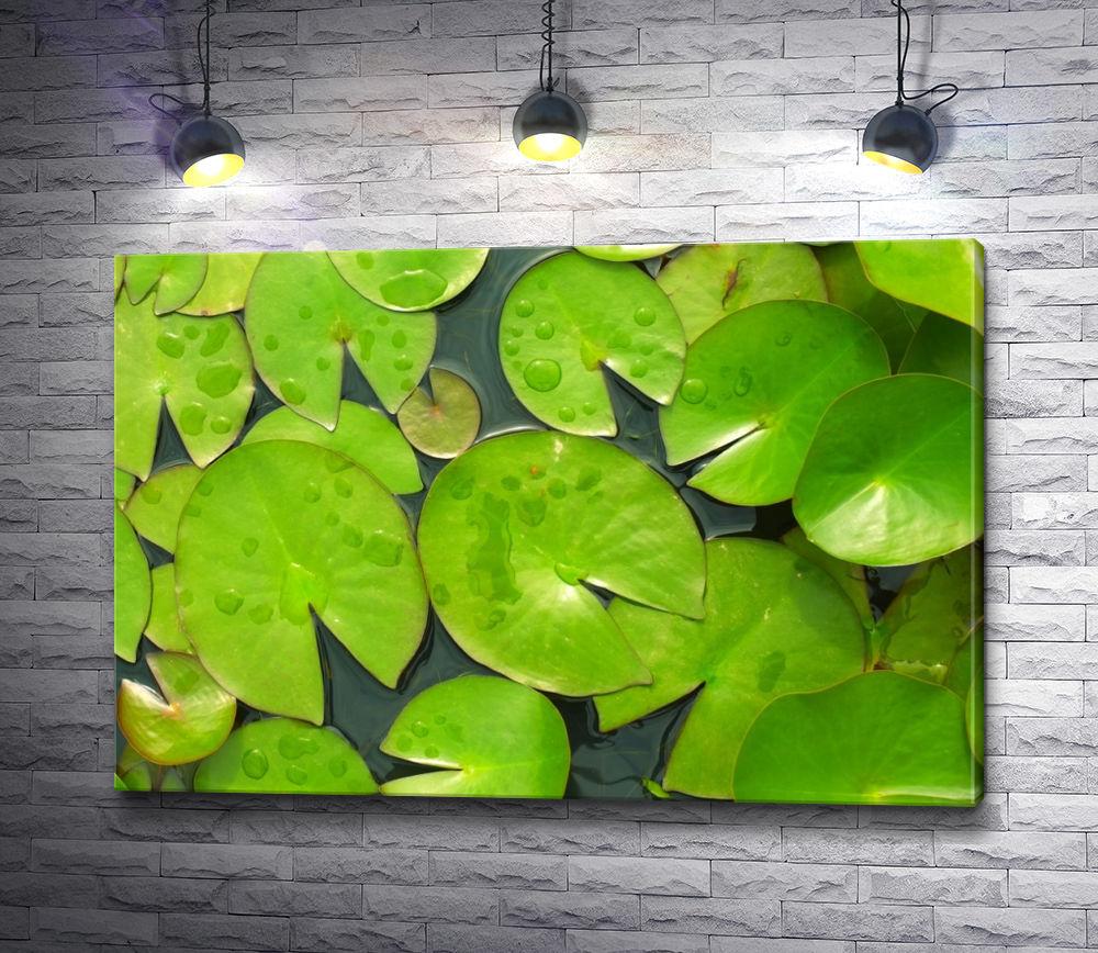 """Картина """"Зеленые листья водяной лилии"""""""