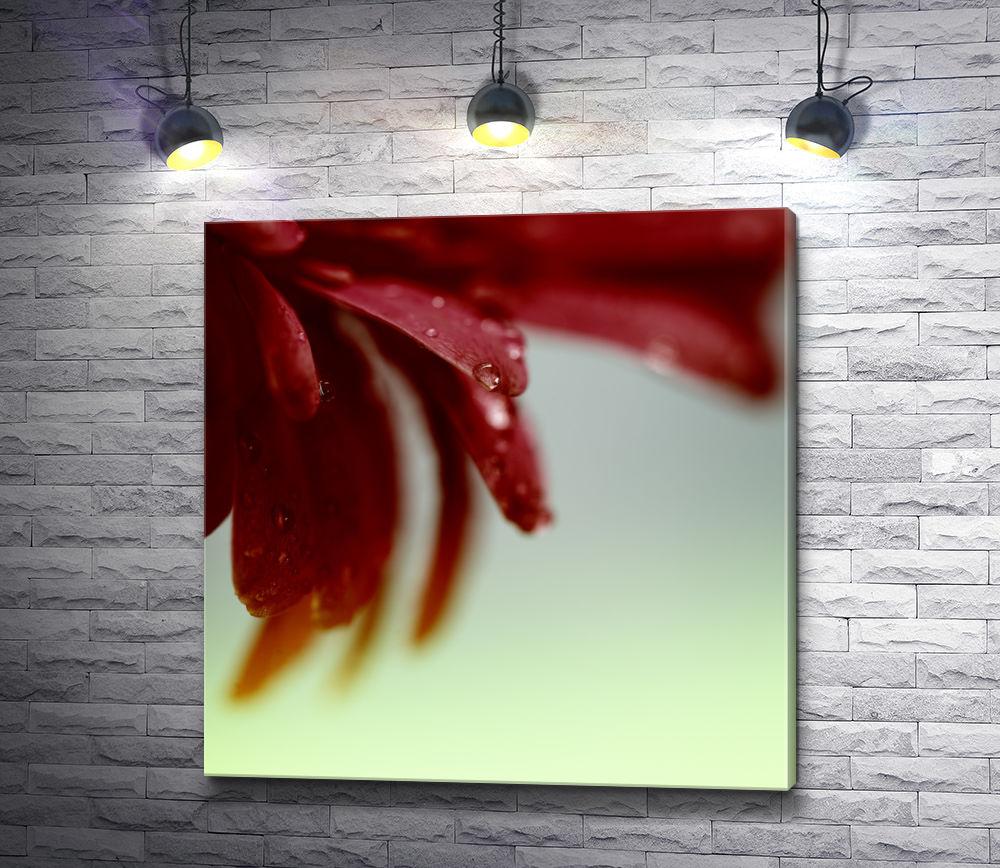 """Картина """"Лепестки красной герберы с каплями воды"""""""