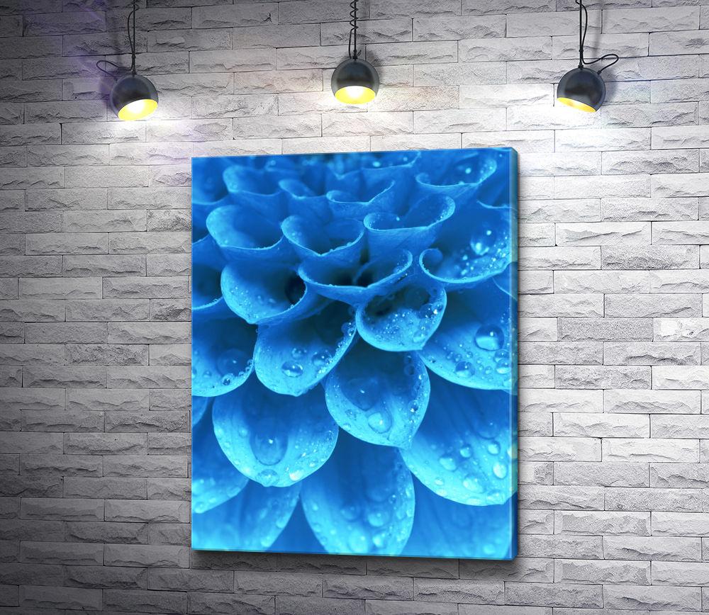 """Картина """"Лепестки голубой хризантемы с капельками воды"""""""