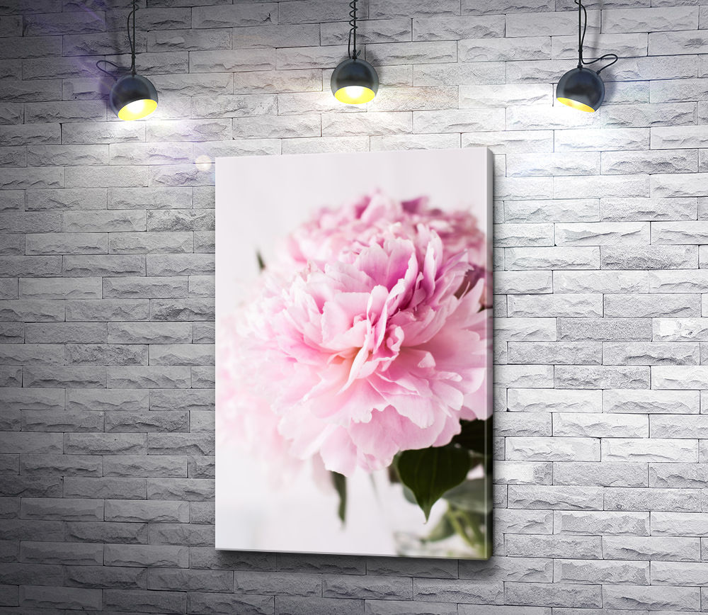"Картина ""Нежно-розовый пион"""