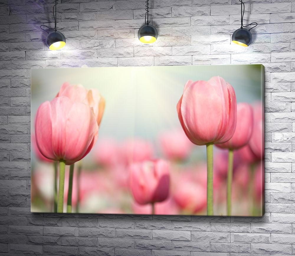 """Картина """"Нежно-розовые тюльпаны"""""""