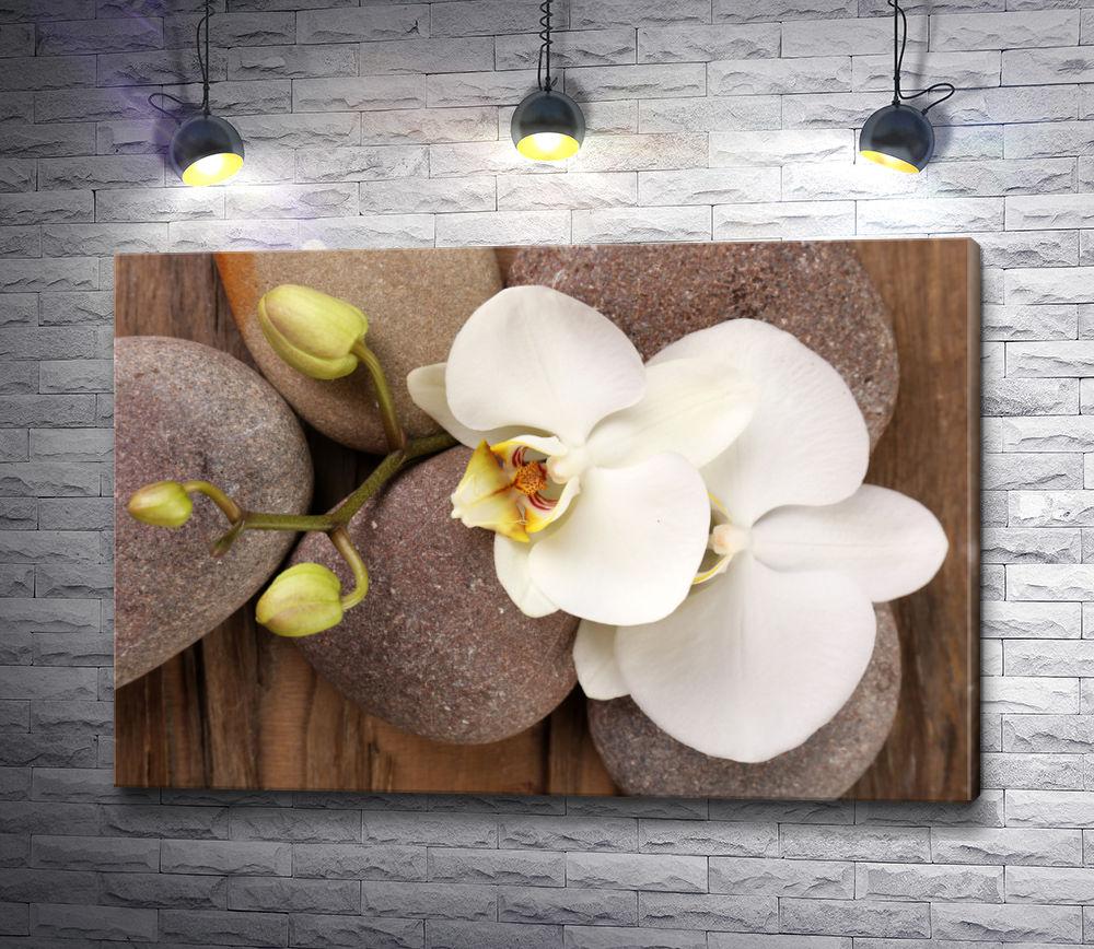 "Картина ""Белая орхидея на камнях"""