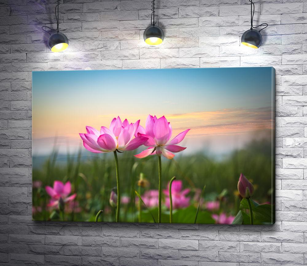 """Картина """"Полевые цветы на закате"""""""