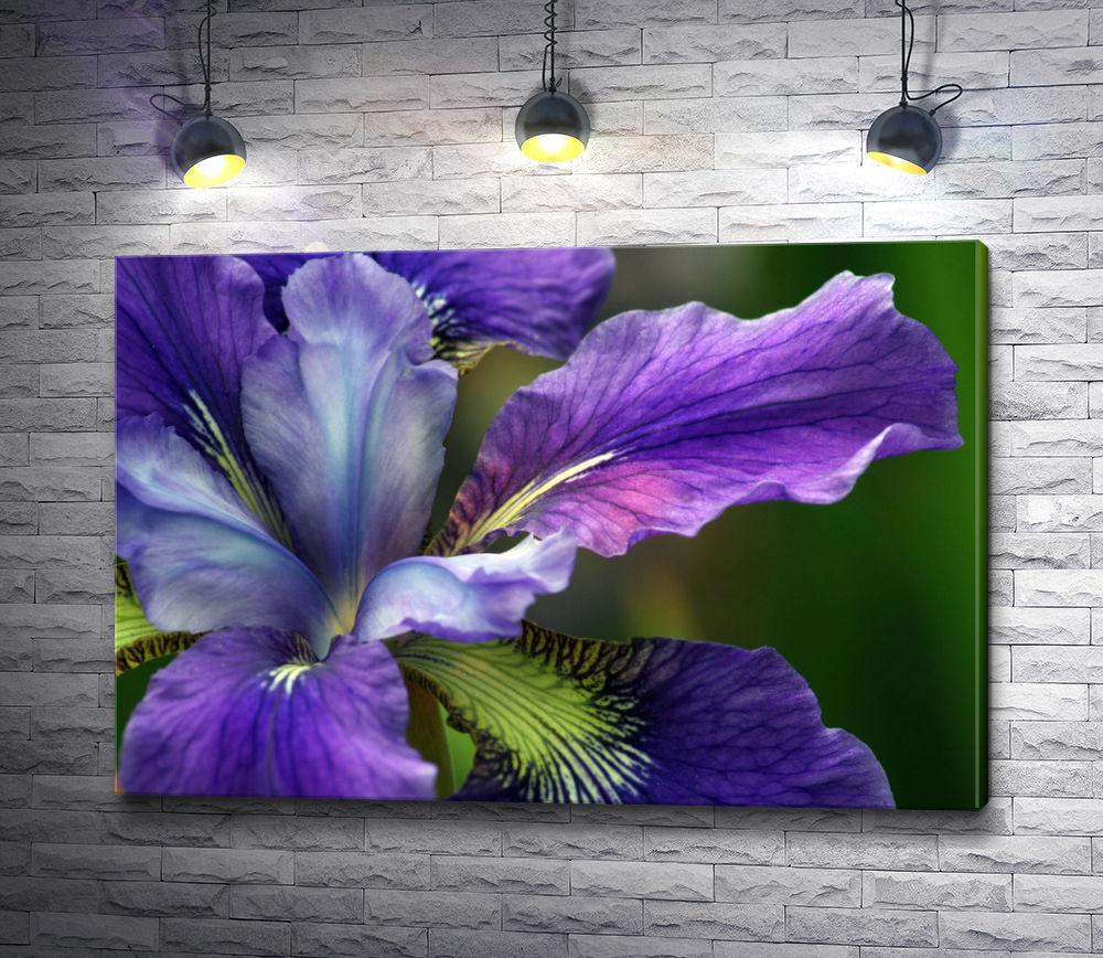 """Картина """"Фиолетовый ирис"""""""