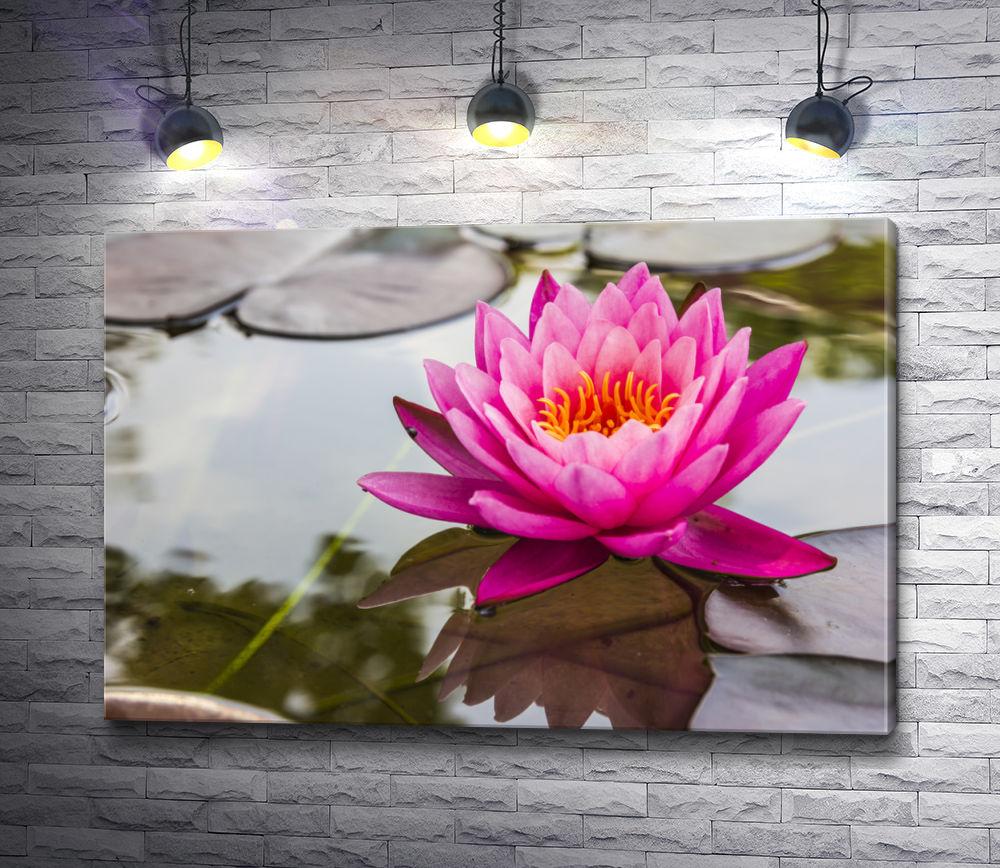 """Картина """"Розовый цветок лотоса на воде"""""""