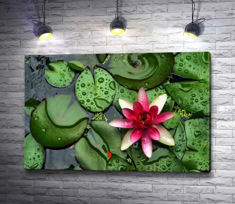 """Картина """"Цветок лотоса на зеленых листьях"""""""
