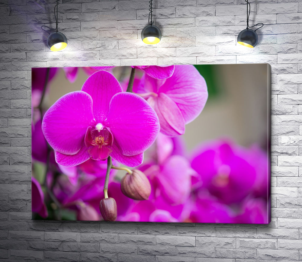 """Картина """"Экзотичные фиолетовые орхидеи"""""""