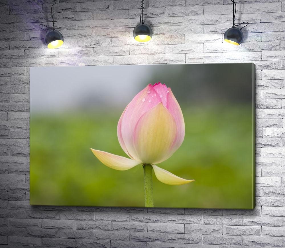 """Картина """"Розовый бутон водяной лилии"""""""