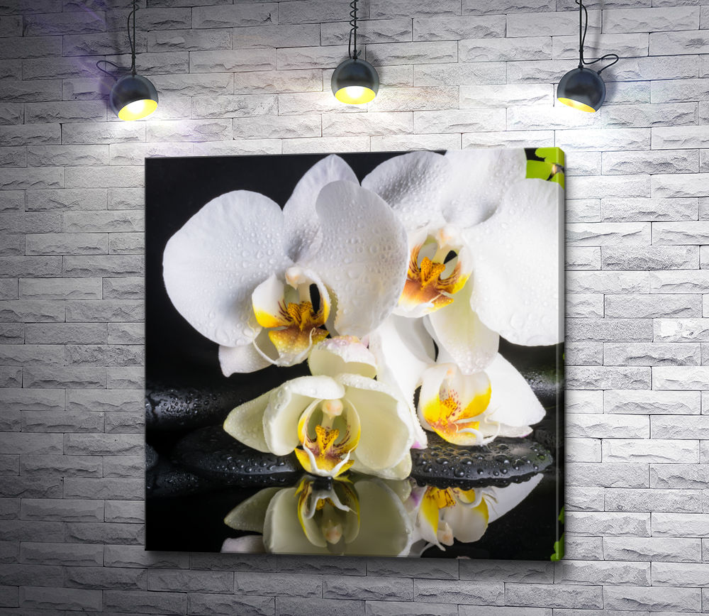 """Картина """"Белоснежные орхидеи на черных камнях спа"""""""