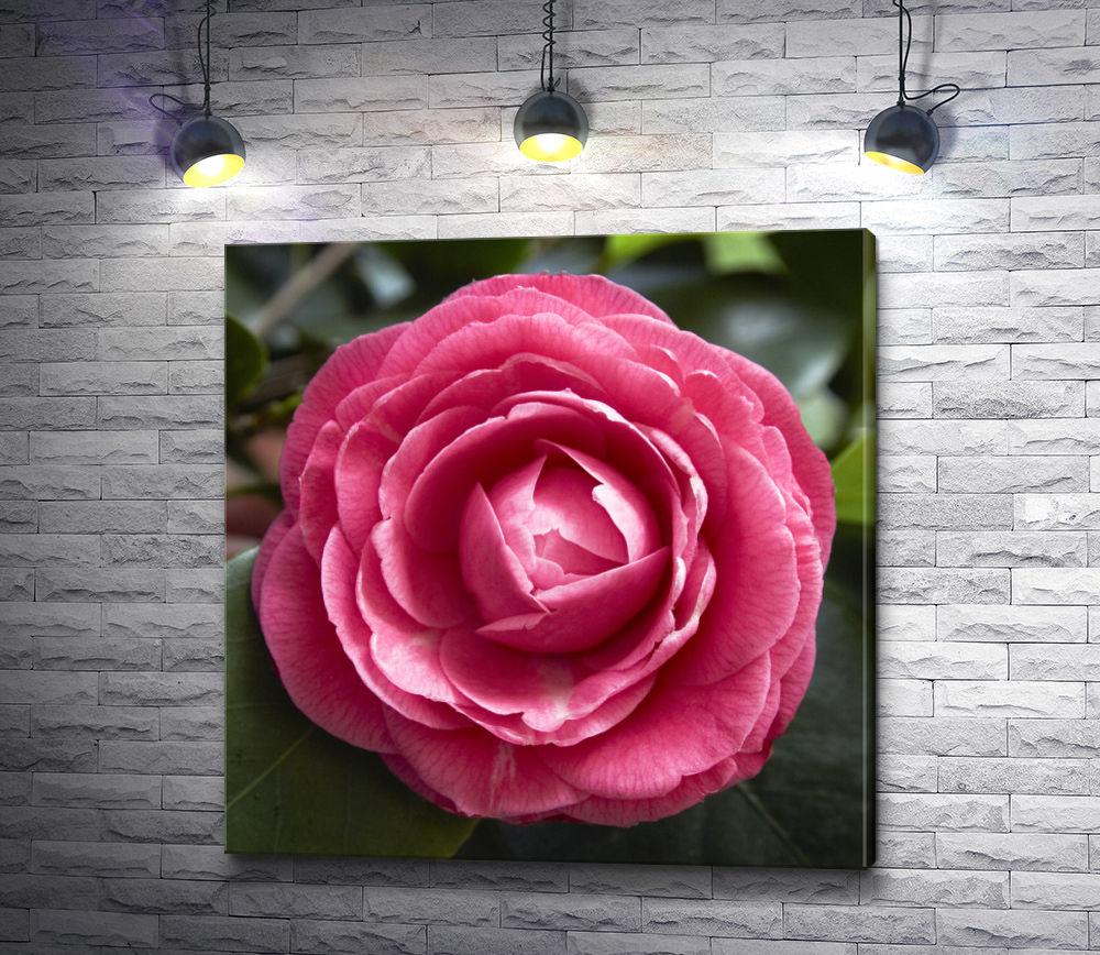 "Картина ""Розовый бутон камелии"""