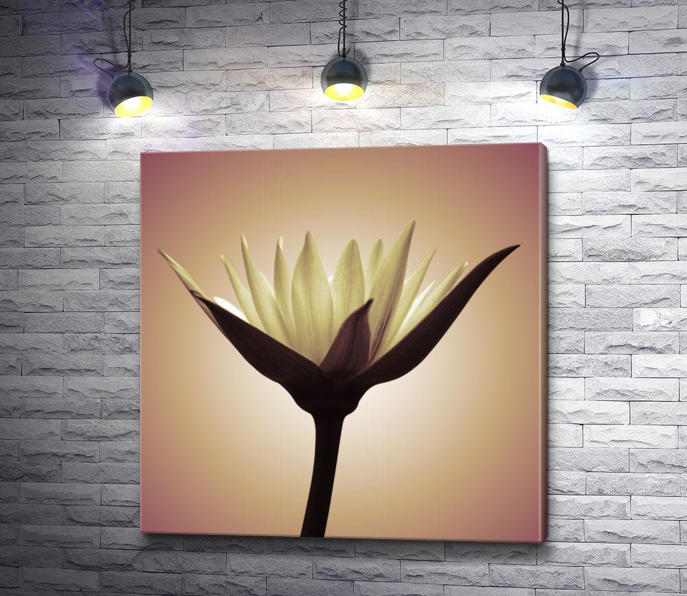 """Картина """"Изысканный экзотический цветок"""""""