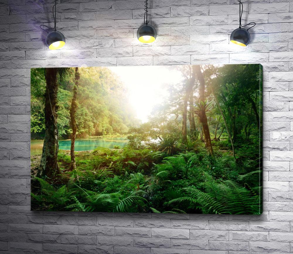 """Картина """"Загадочные джунгли в национальном парке Semuc Champey"""""""
