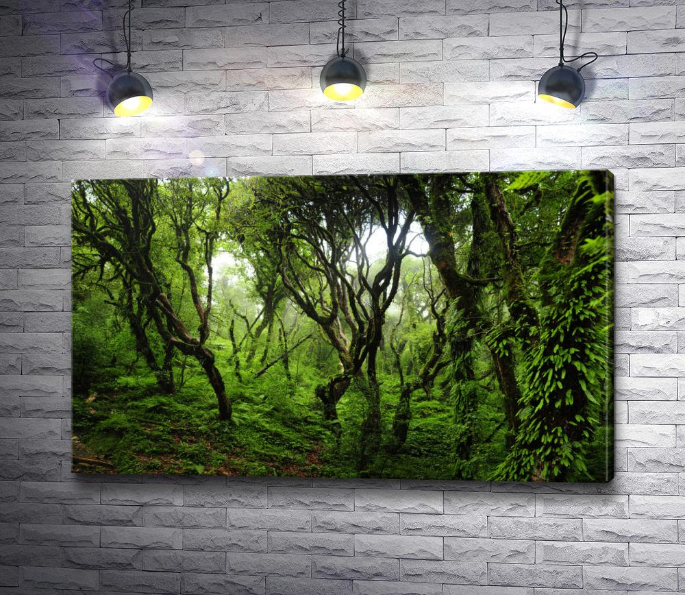 """Картина """"Загадочный лес,  Непал """""""