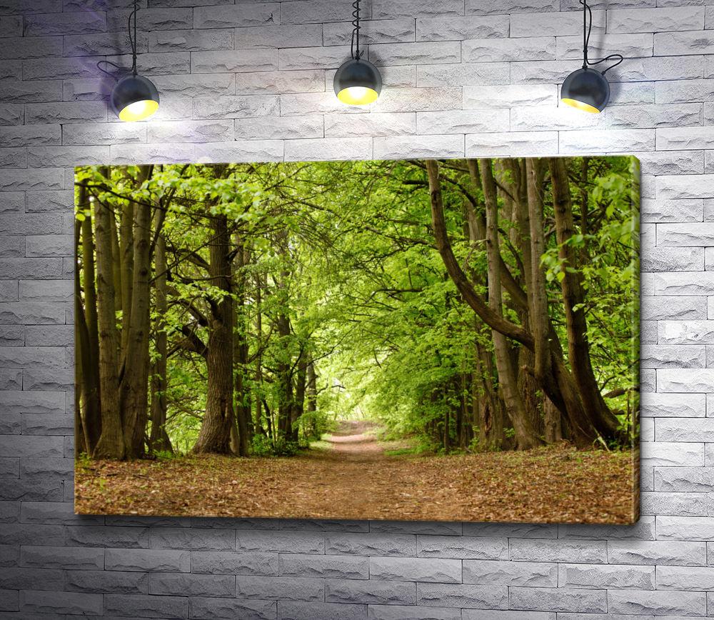 """Картина """"Дорожка в летнем лесу"""""""