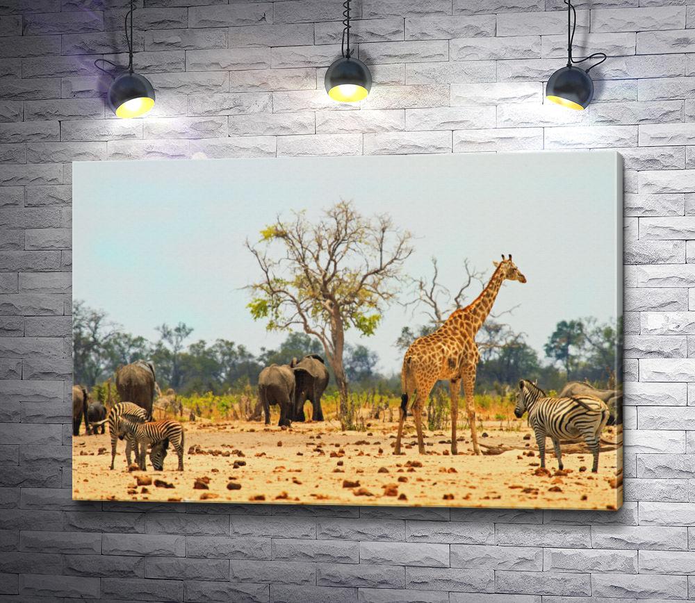 """Картина """"Зебры, слоны и жираф в парке в Зимбабве"""""""