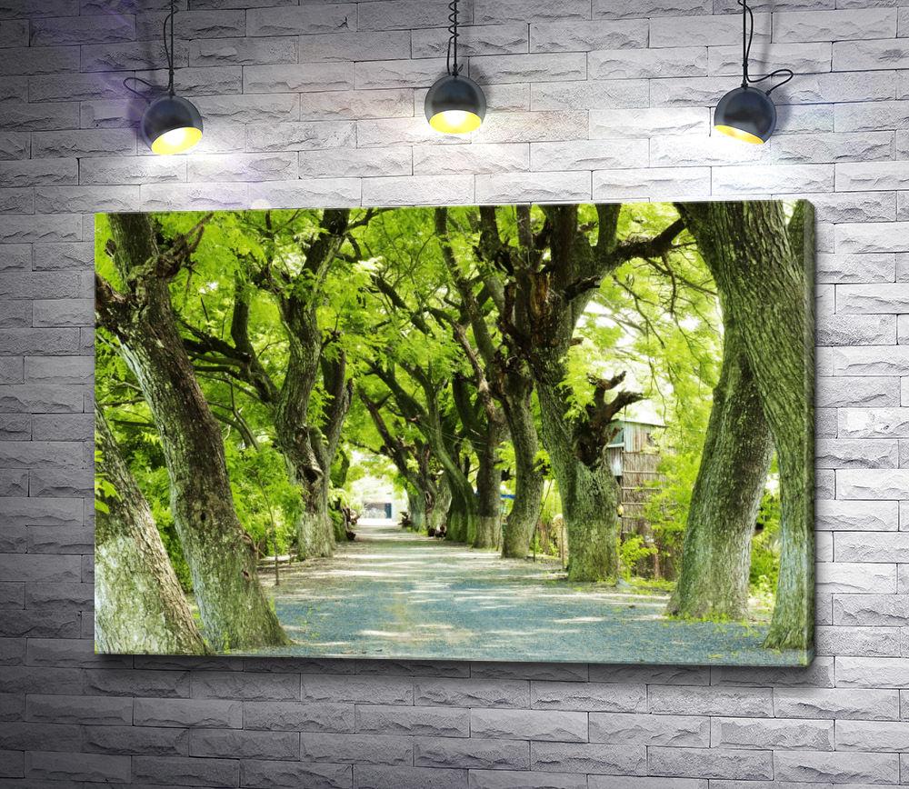 """Картина """"Красивая аллея с зелеными деревьями"""""""