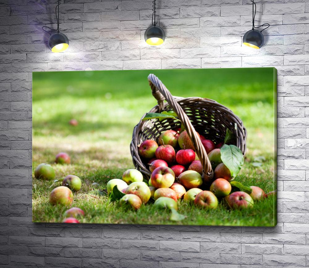 """Картина """"Опрокинутая на траву корзина яблок """""""