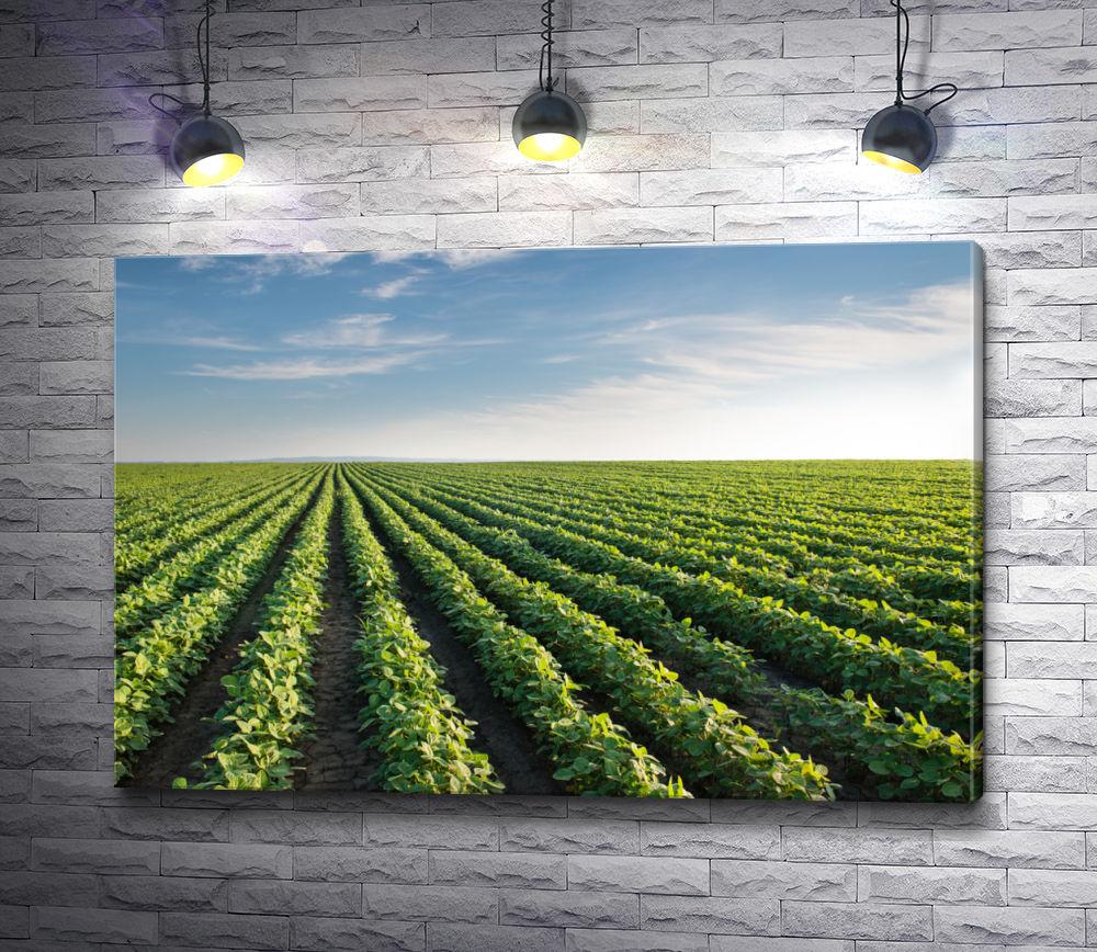 """Картина """"Зеленые виноградники"""""""
