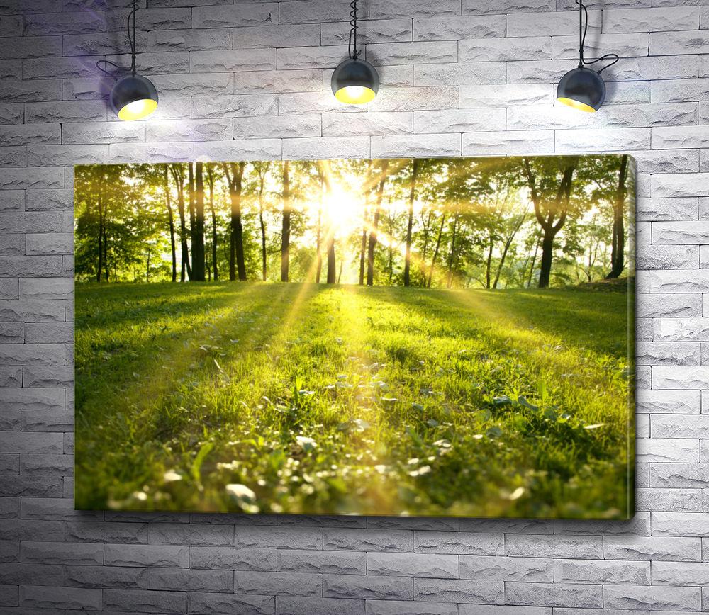 """Картина """"Лучи солнца в лесу"""""""