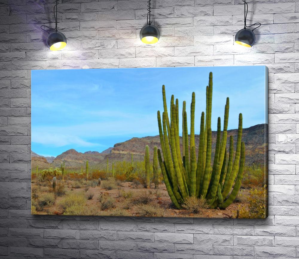 """Картина """"Кактус в пустыне"""""""