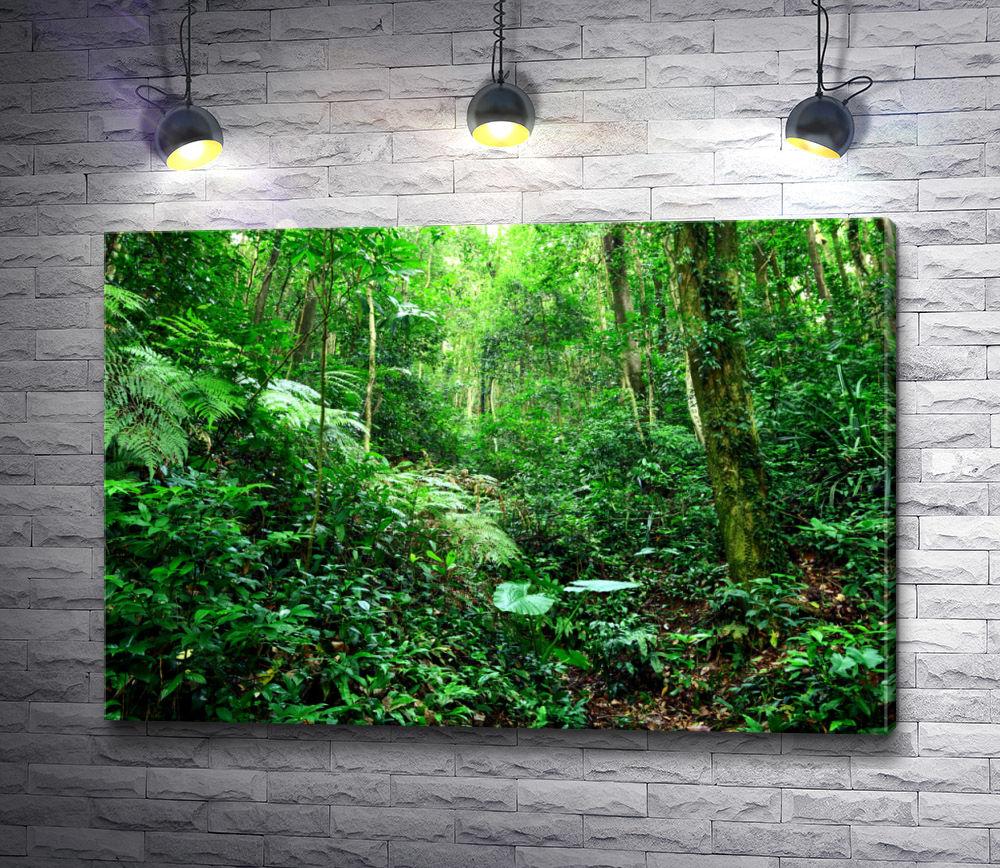 """Картина """"Нетронутые джунгли"""""""