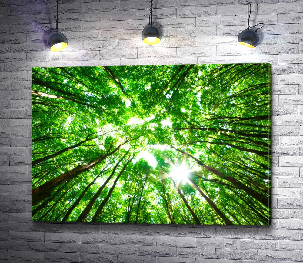 """Картина """"Зеленая листва тянется к солнцу"""""""