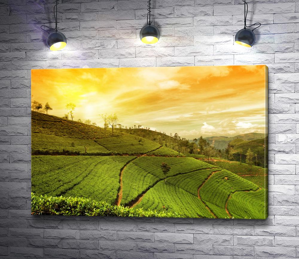 """Картина """"Плантации чая в свете заката"""""""