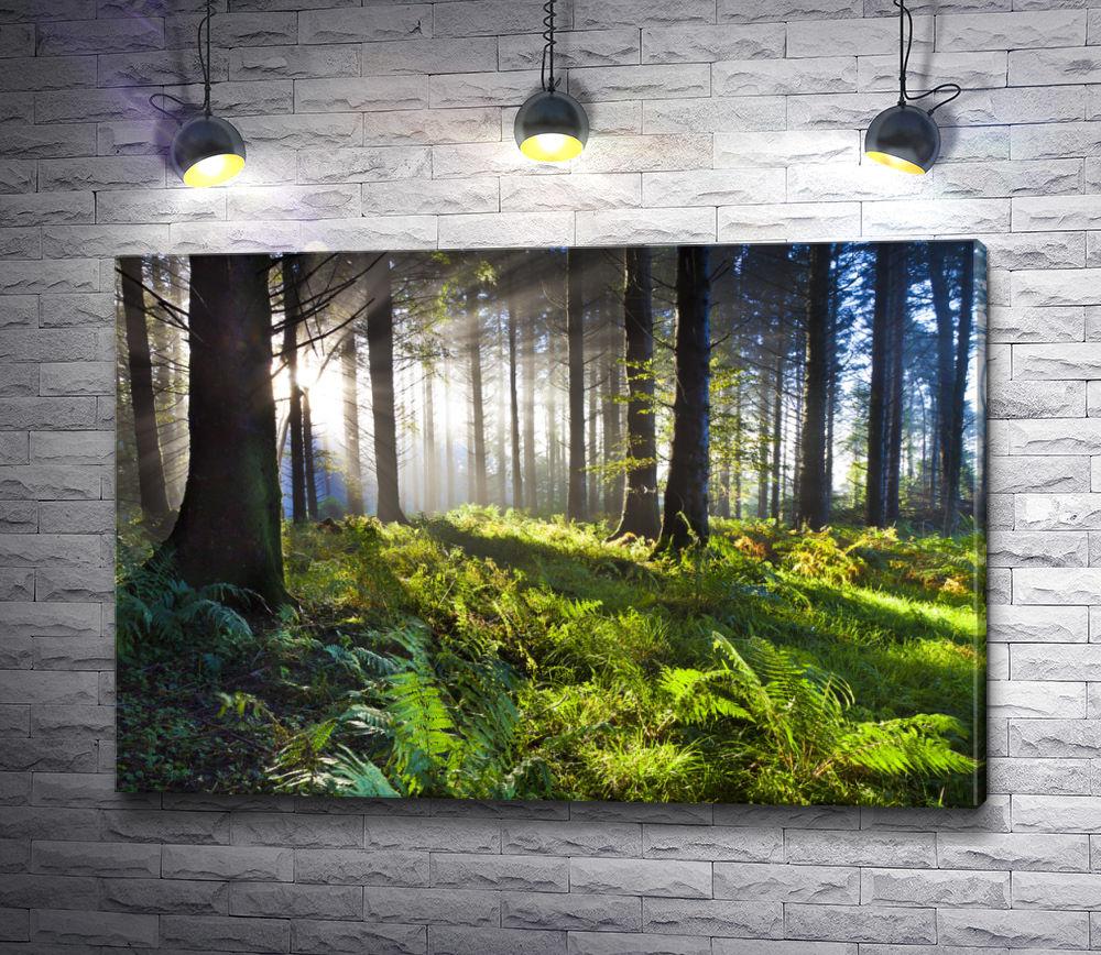 "Картина ""Папоротник в лесу"""