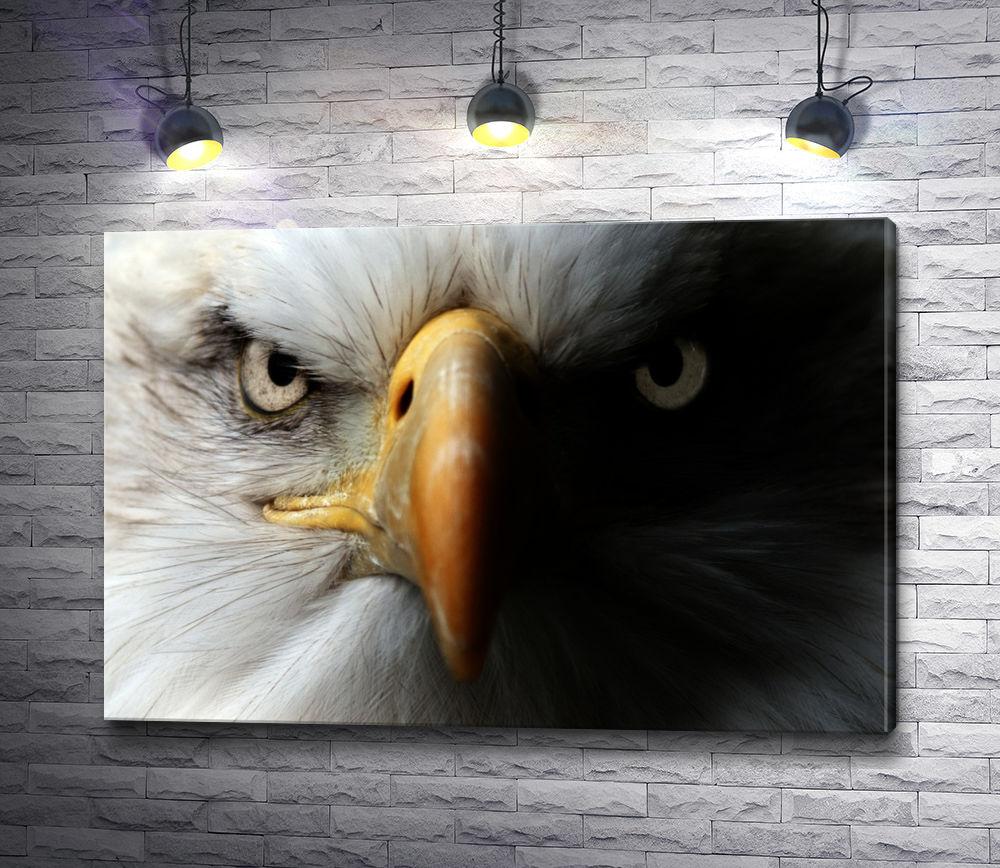 """Картина """"Хищный взгляд орла"""""""