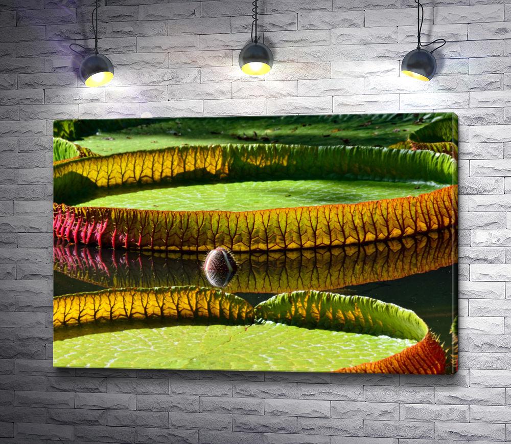 """Картина """"Амазонская водяная лилия"""""""