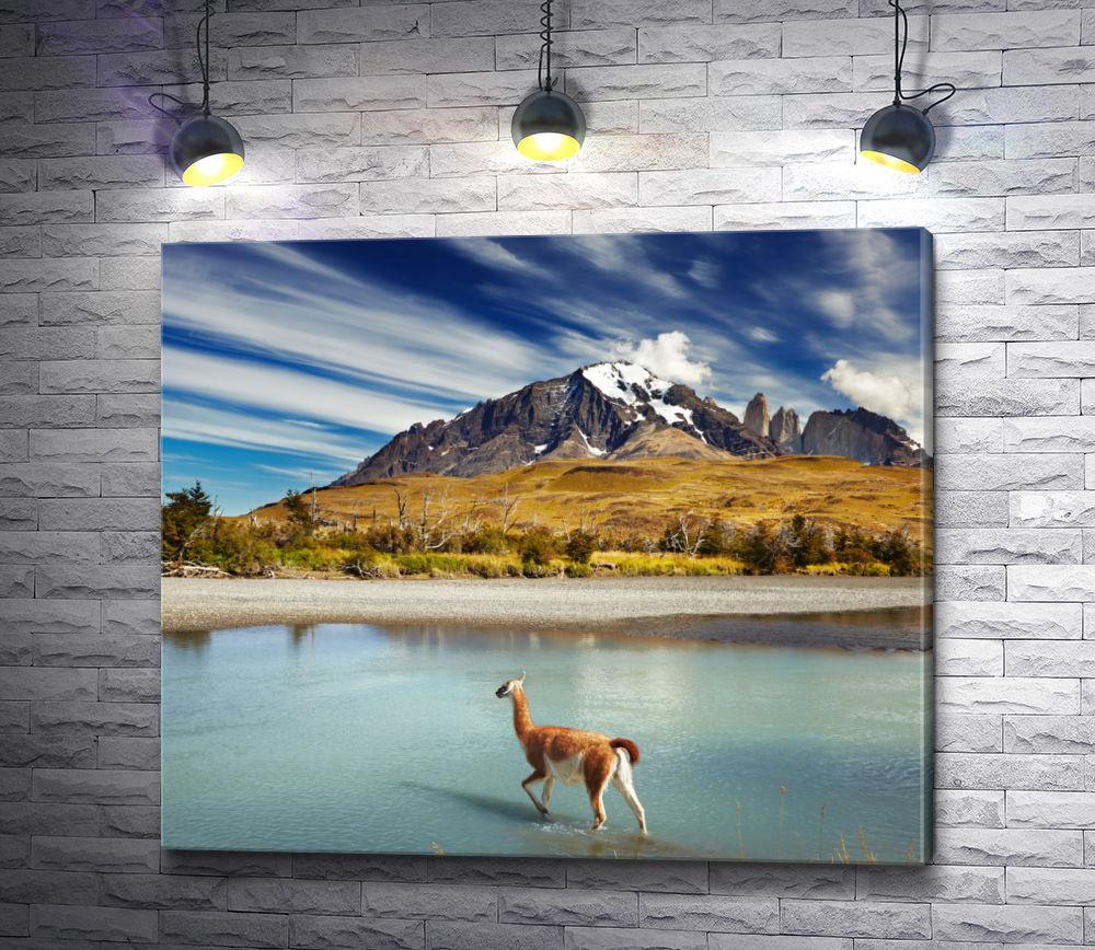 """Картина """"Лама в горах"""""""