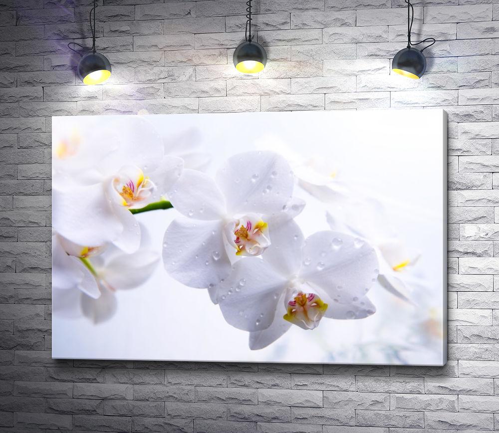 """Картина """"Ветка белых орхидей"""""""