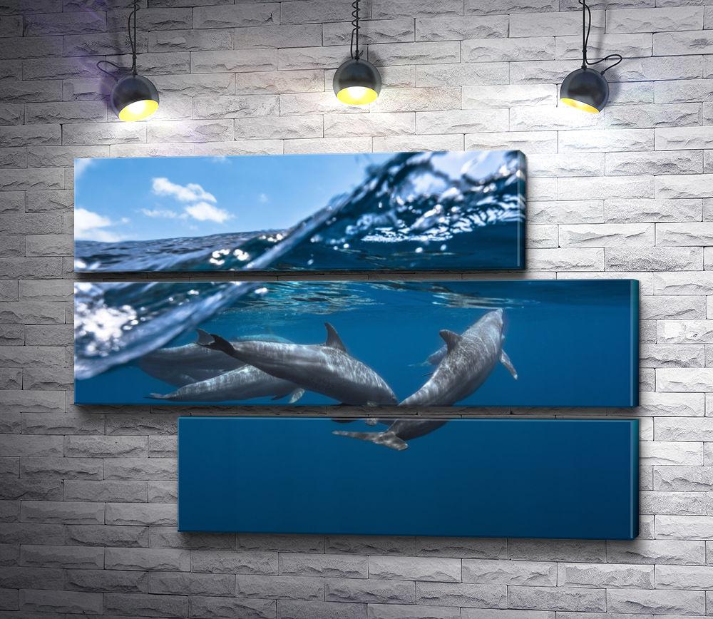 """Картина """"Дельфины у кромки воды"""" из 3-х частей (модуль №15)"""